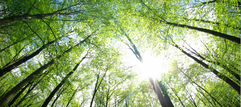 Qualification environnementale : halocarbures